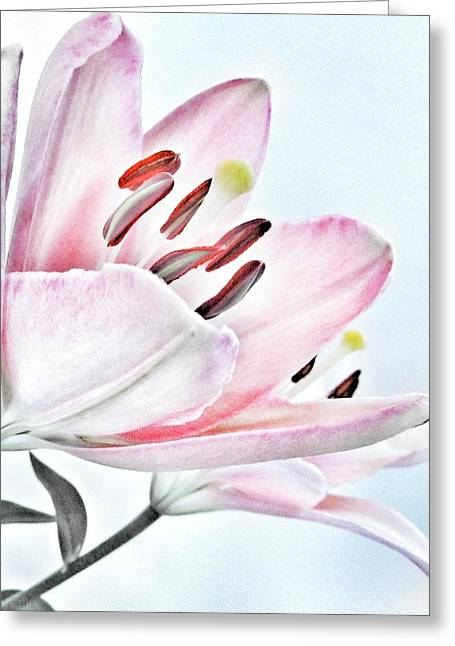 Get Well Flowers Greeting Cards - Lily - Soft Pink and Grey Flower Greeting Card by Marianna Mills