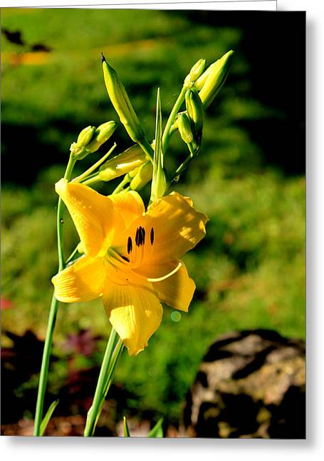 Lily Sunshine Greeting Card by Hanne Lore Koehler
