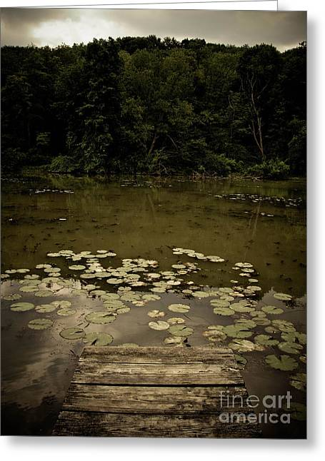 Lilypads At The Dock Greeting Card by Amy Cicconi