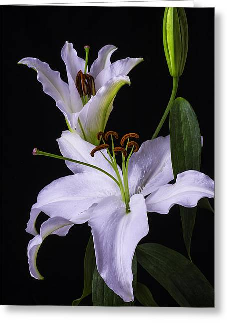 Lily's In Bloom Greeting Card by Garry Gay