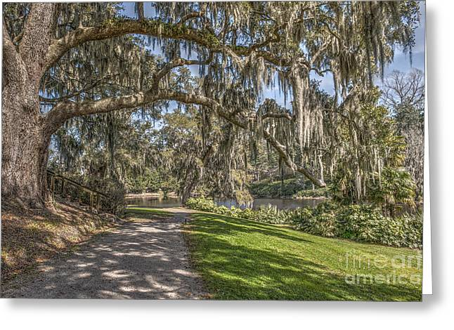 Charleston Pathway Greeting Cards - Limbs Dripping with Spanish Moss Greeting Card by Dale Powell