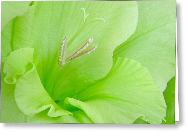 Gladiolas Greeting Cards - Lime Sherbet Greeting Card by David and Carol Kelly
