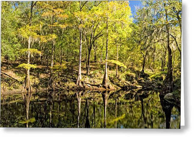 Beautiful Creek Greeting Cards - Lime Spring Greeting Card by Rich Leighton