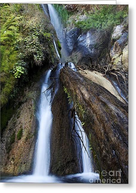 Big Sur Greeting Cards - Limekiln Waterfall Greeting Card by Jenna Szerlag