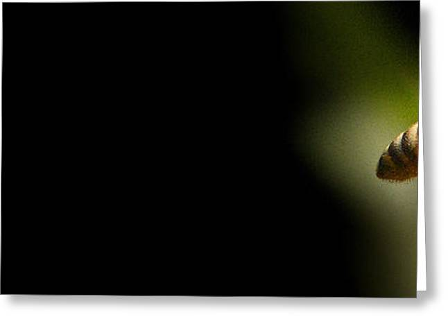 Limelight Photographs Greeting Cards - Limelight.. Greeting Card by Al  Swasey