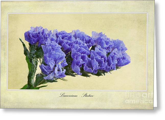 Limonium Greeting Cards - Limonium Greeting Card by John Edwards