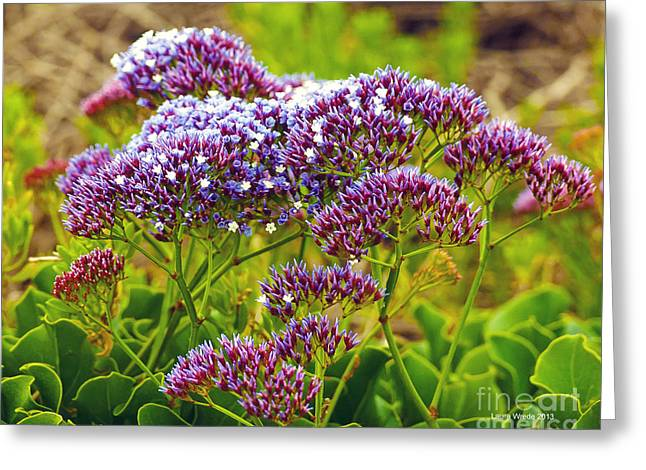 Flowers Along The California Coast Greeting Cards - Limonium - Statice Greeting Card by Artist and Photographer Laura Wrede