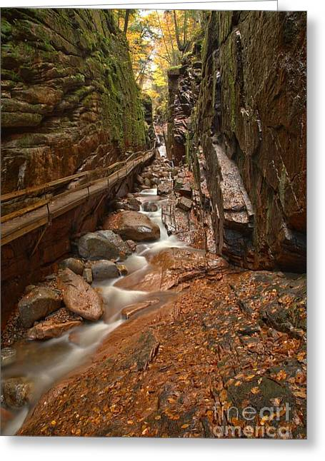 Lush Green Greeting Cards - Lincoln New Hampshire Flume Gorge Greeting Card by Adam Jewell