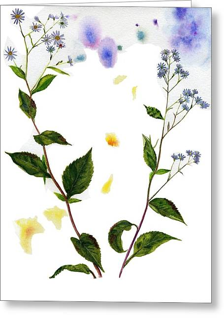 Aster Paintings Greeting Cards - Lindleys Aster Greeting Card by Tanya  Beyer
