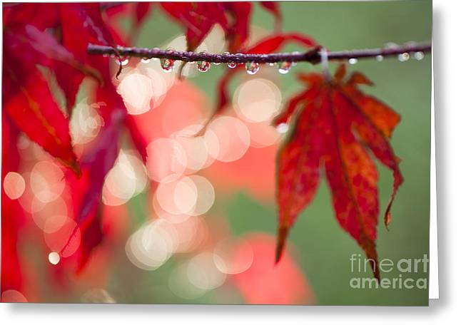 Backlit Greeting Cards - Line of Reflections Greeting Card by Anne Gilbert