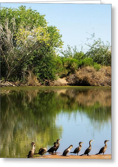 Art For Sanctuaries Greeting Cards - Line Up Greeting Card by Lisa S Baker