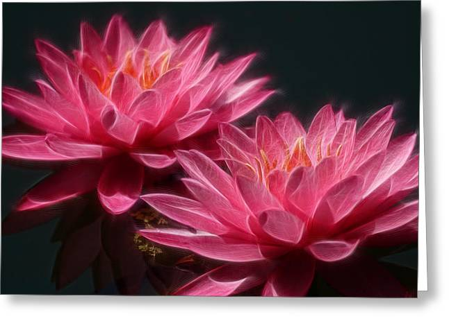 Digital Altered Greeting Cards - Lined Pink Water Lilies Greeting Card by Linda Phelps