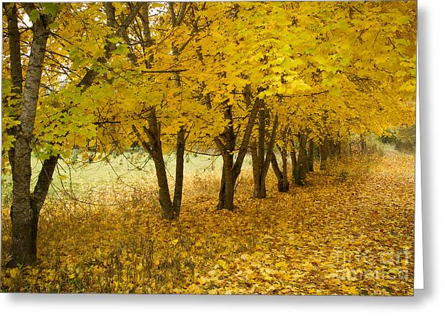 Line Of Trees Greeting Cards - Lined with Gold Greeting Card by Idaho Scenic Images Linda Lantzy