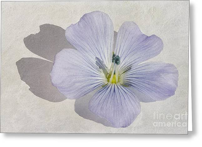 Stamen Paintings Greeting Cards - Linen Watercolour Greeting Card by John Edwards