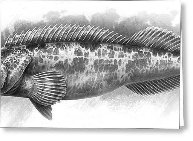 Lingcod_01 Greeting Card by Javier Lazo