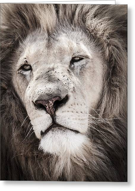 Bigcat Greeting Cards - Lion #1 Greeting Card by Andy-Kim Moeller