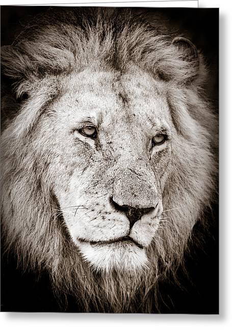 African Inspired Art Greeting Cards - Lion Cameo Greeting Card by Mike Gaudaur