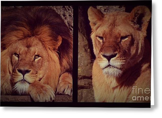 Couple Pyrography Greeting Cards - Lion Couple Greeting Card by Miryam  UrZa