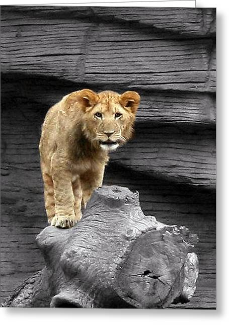 Lioness Greeting Cards - Lion Cub Greeting Card by Cathy Harper