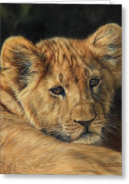 David Greeting Cards - Lion Cub Greeting Card by David Stribbling