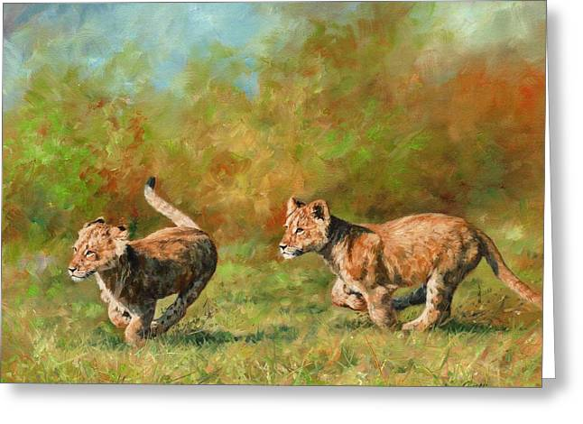 Lioness Greeting Cards - Lion Cubs Running Greeting Card by David Stribbling