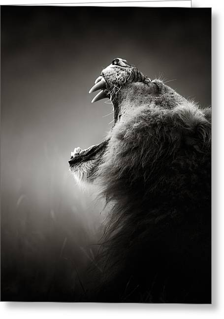 Monochrome Greeting Cards - Lion displaying dangerous teeth Greeting Card by Johan Swanepoel