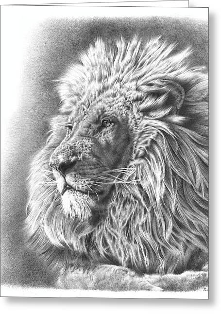 Wild Life Drawings Greeting Cards - Lion Drawing Greeting Card by Heidi Vormer
