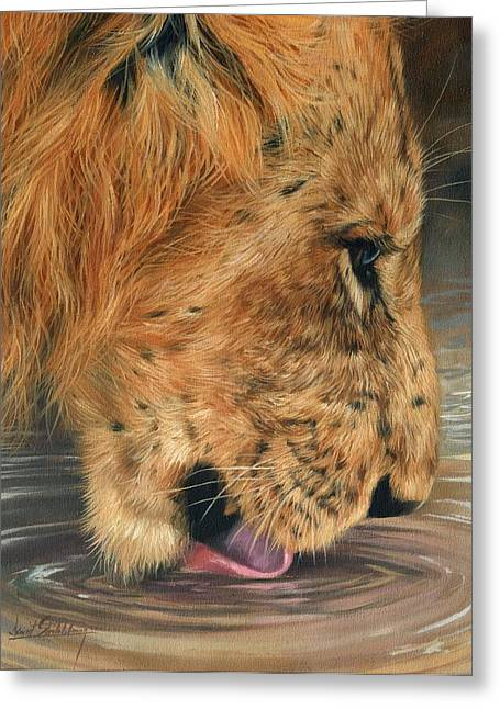Lions Greeting Cards - Lion Drinking Greeting Card by David Stribbling