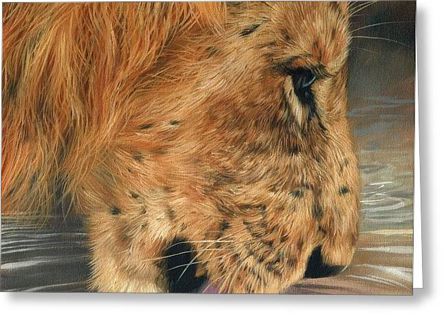 Lion Drinking Greeting Card by David Stribbling