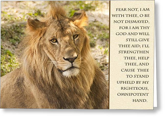 Living Life Photography Greeting Cards - Lion Encouragement Greeting Card by Carolyn Marshall