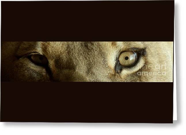 Lioness Greeting Cards - Lion Eyes- 9296 Greeting Card by Gary Gingrich Galleries
