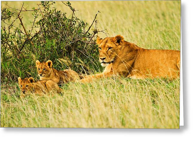 Reserve Pyrography Greeting Cards - Lion Family Greeting Card by Kongsak Sumano