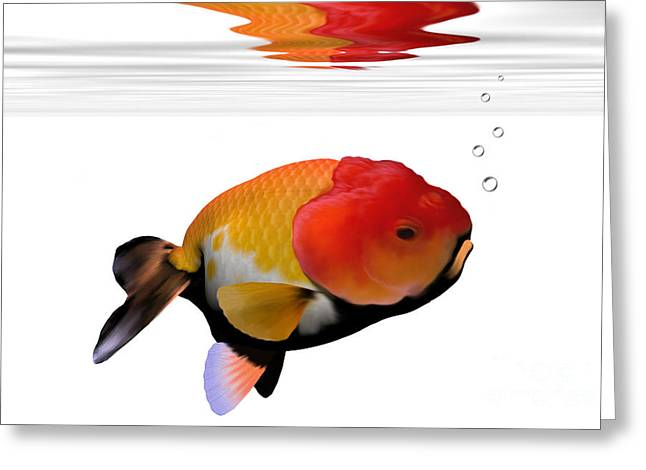 Goldfish Digital Greeting Cards - Lion-Head Goldfish Greeting Card by Corey Ford