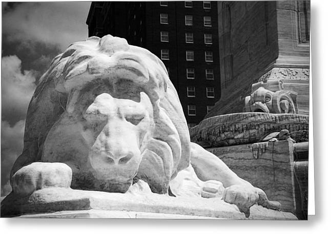 Lions Greeting Cards - Lion in Niagara Square Greeting Card by Beverly Stapleton