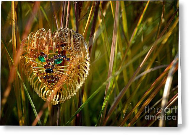 Male Greeting Cards - Lion in the Grass Greeting Card by Amy Cicconi