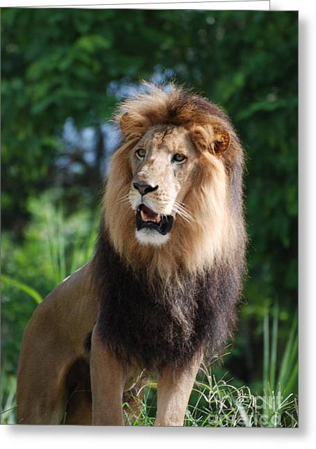 Pictures Of Cats Greeting Cards - Lion King of the Jungle Greeting Card by DejaVu Designs