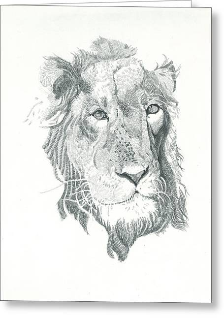 Work Place Drawings Greeting Cards - Lion linear close up Greeting Card by Makarand Joshi