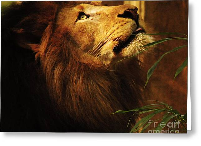 Testament Greeting Cards - The Lion Of Judah Greeting Card by Olivia Hardwicke