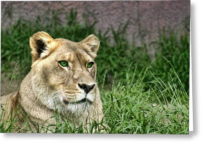 Pondering Pyrography Greeting Cards - Lion Pride Greeting Card by Jerry Hetrick