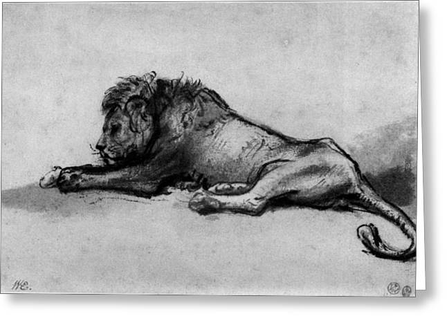"""storm Prints"" Drawings Greeting Cards - Lion sketch Greeting Card by Rembrandt"