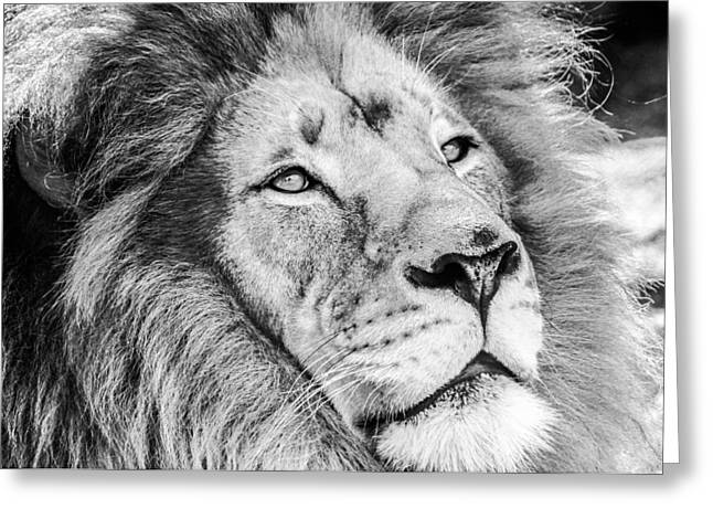 Expressiveness Greeting Cards - Lion Greeting Card by Robert  Aycock