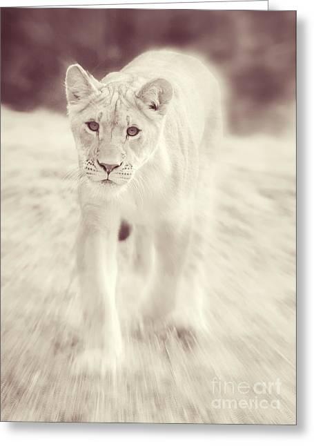 Lioness Greeting Cards - Lion Spirit Animal Greeting Card by Chris Scroggins