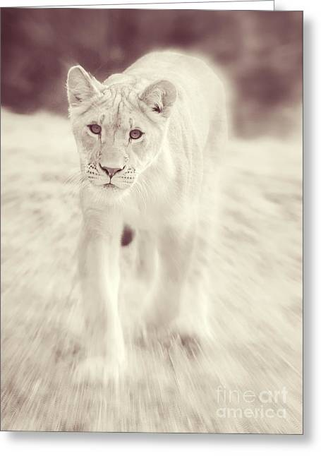 Lioness Greeting Cards - Lion Spirit Animal Greeting Card by Chris Scroggins