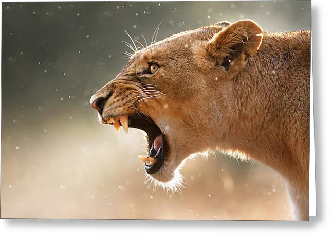 Roar Greeting Cards - Lioness displaying dangerous teeth in a rainstorm Greeting Card by Johan Swanepoel