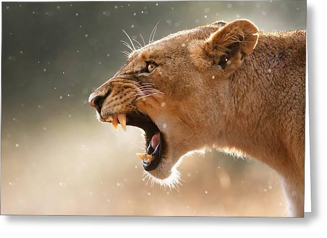Lioness displaying dangerous teeth in a rainstorm Greeting Card by Johan Swanepoel