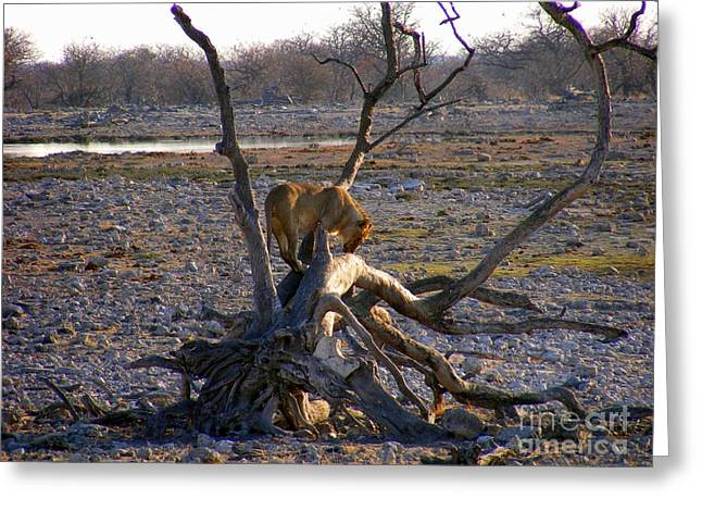 Lioness Greeting Cards - Lioness on Tree Greeting Card by Noa Yerushalmi