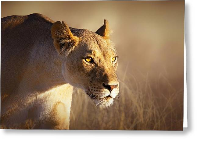 Grassland Greeting Cards - Lioness portrait-1 Greeting Card by Johan Swanepoel