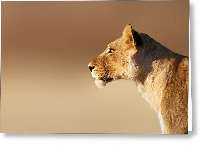 Felines Photographs Greeting Cards - Lioness portrait Greeting Card by Johan Swanepoel