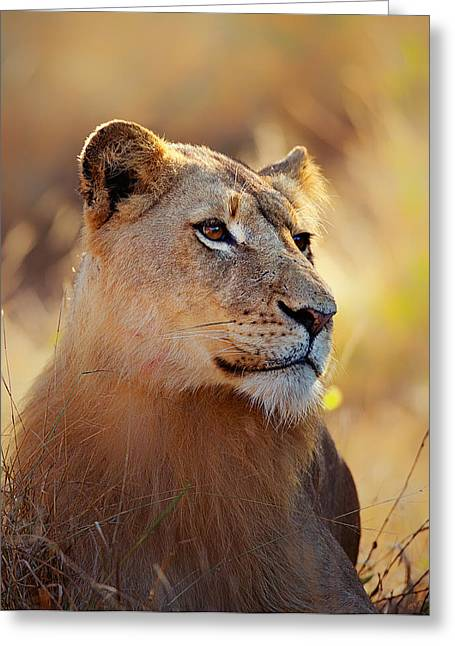 Lions Photographs Greeting Cards - Lioness portrait lying in grass Greeting Card by Johan Swanepoel