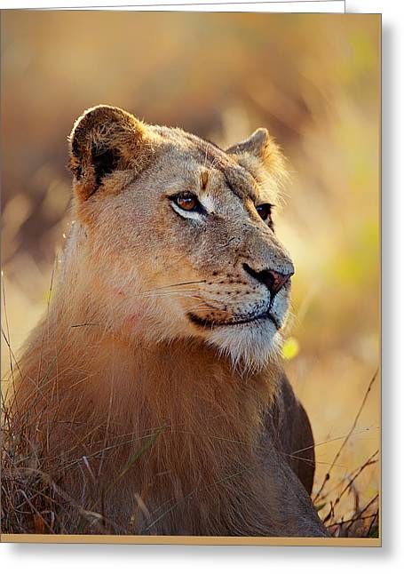 Lioness Greeting Cards - Lioness portrait lying in grass Greeting Card by Johan Swanepoel